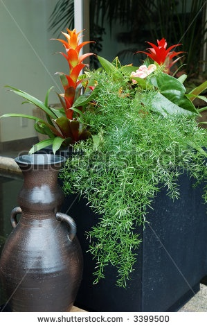 Image Detail For  Tropical Plants In Container On A Patio Stock Photo  3399500 .