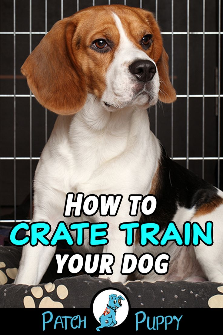 Is It Cruel To Crate A Dog At Night Dog Training Techniques