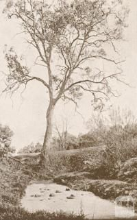 Old Ford, Darebin Creek, Ivanhoe, 1937