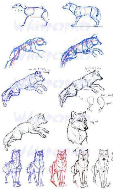 Zeichnen lernen Tutorial Hund Wolf Skizze Bleistift Erfolg im Abitur – Mit ZENTR