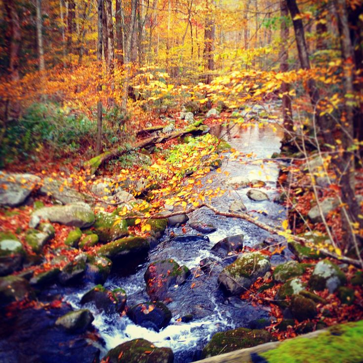 Fall in The Smoky Mountains!