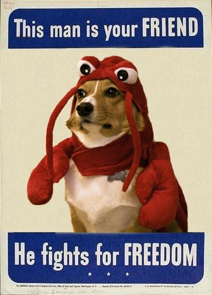 17 Best images about Corgi meme on Pinterest | Lobsters ... | 421 x 587 jpeg 83kB