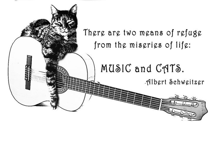 CAT and GUITAR T Shirt two means of refuge from Music and Cats Albert Schweitzer All on a Tee via Etsy.