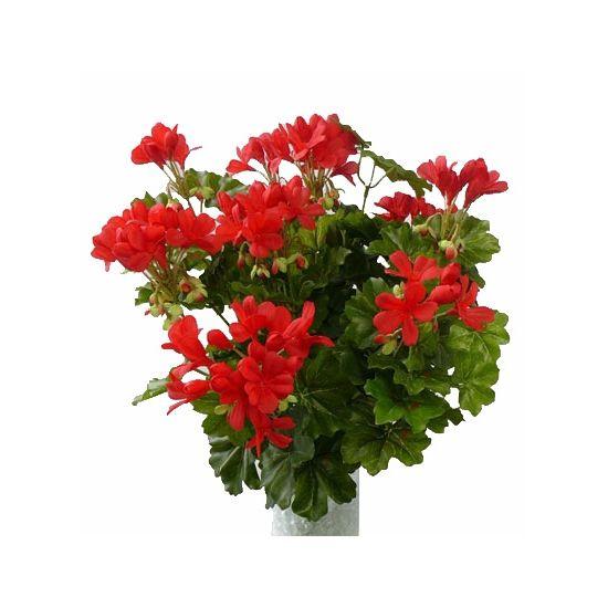 Rode geranium kunstplant 40 cm  Kunst Oostenrijkse geranium plant rood 40 cm. Oostenrijkse geranium kunstplant met rode bloemen. De plant is ongeveer 40 cm groot. De plant wordt geleverd zonder pot.  EUR 15.95  Meer informatie