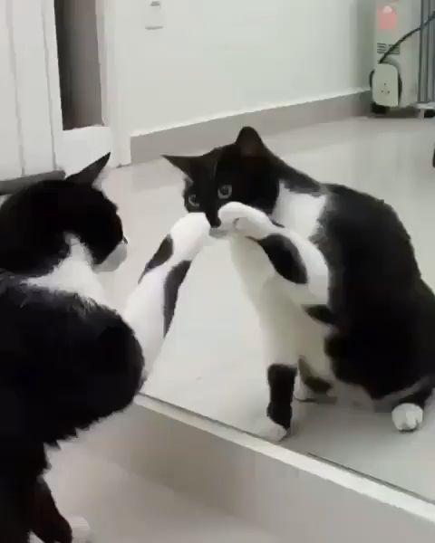 Wie niedlich die Katze spielt, ist ein lustiges Video