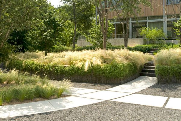 430 best images about drought tolerant gardens on for Modern ornamental grasses