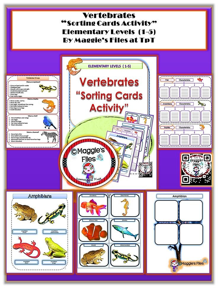 "The "" Vertebrate Sorting Cards Activity "" . During this activity students will read the main characteristics of vertebrates, fill out the graphic organizers using their own words as well as cut and sort each vertebrate group: ( Fish, Amphibians, Reptiles, Birds and Mammals) This activity is design for elementary Students. (2-5) by Maggie's Files at teachers pay teachers http://www.teacherspayteachers.com/Product/Vertebrates-Sorting-Cards-Activity-Elementary-Levels-1-5-1296144"