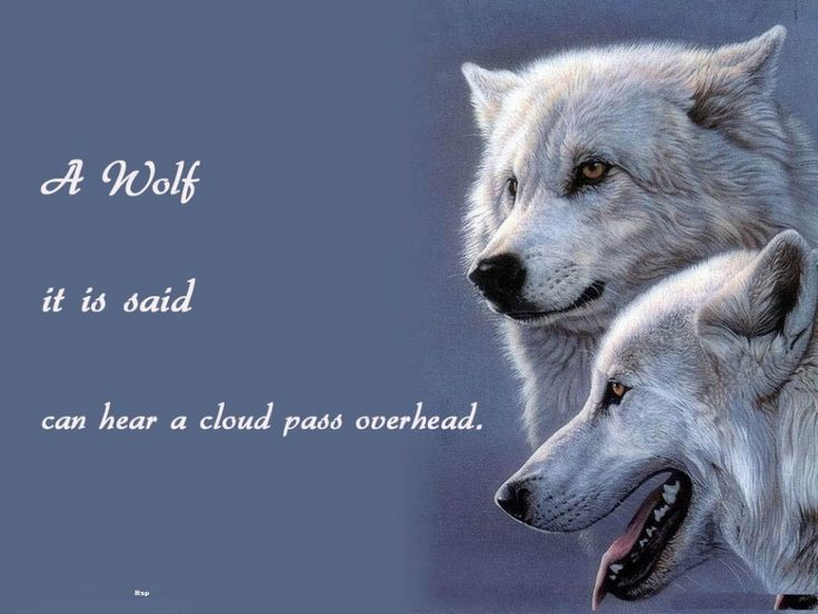 Dan Wolfe Quotes: Meer Dan 1000 Lone Wolf Quotes Op Pinterest