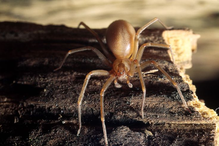 how to get rid of brown recluse spiders outside