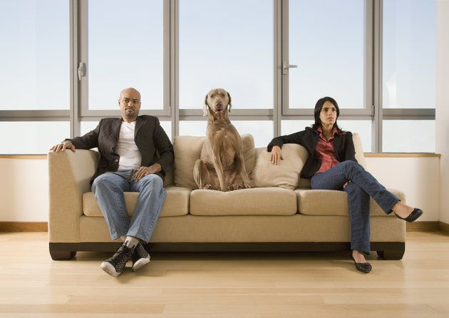 In Alaska, Divorce Courts Must Now Consider Pet Wellbeing | The Huffington Post