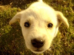 My favorite puppy house training article and I read a ton of them!