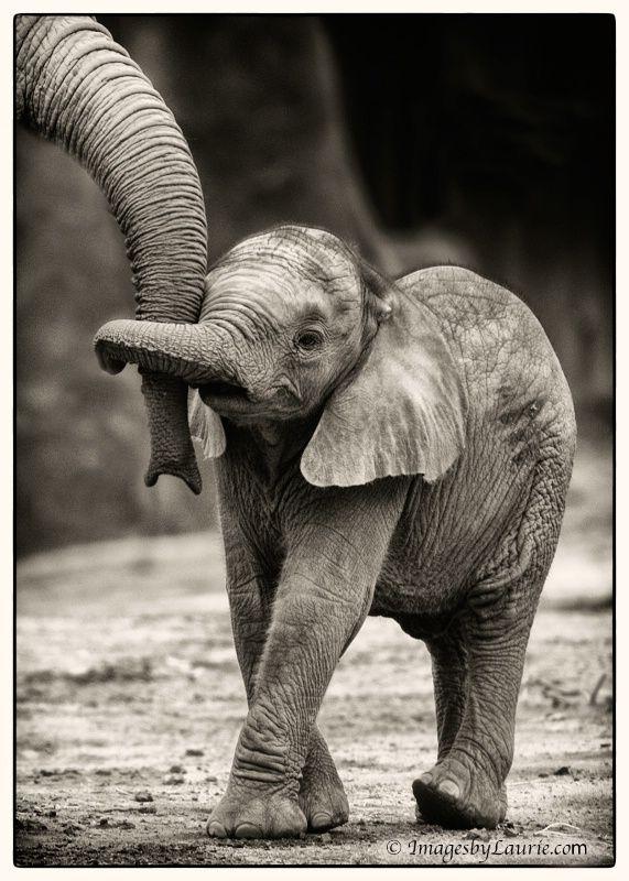 1210220657031baby_elephant_hug___laurie.jpg 571×800 pixels