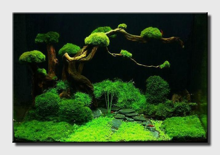 Aqua Scaping Nano fresh Pinterest Aquarium, Aqua and Bonsai
