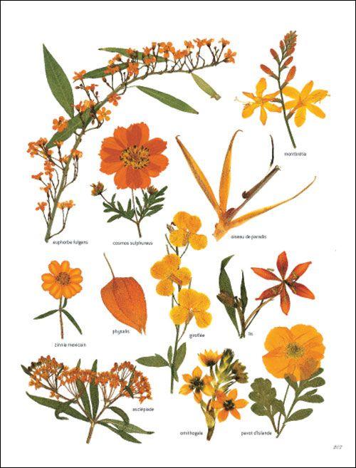 Fleurs Orangées #herbier