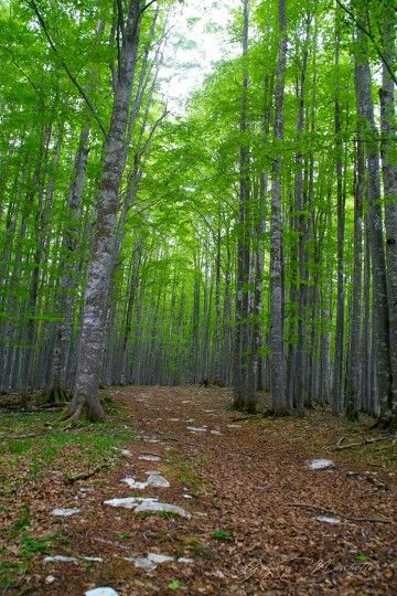 La magia della foresta