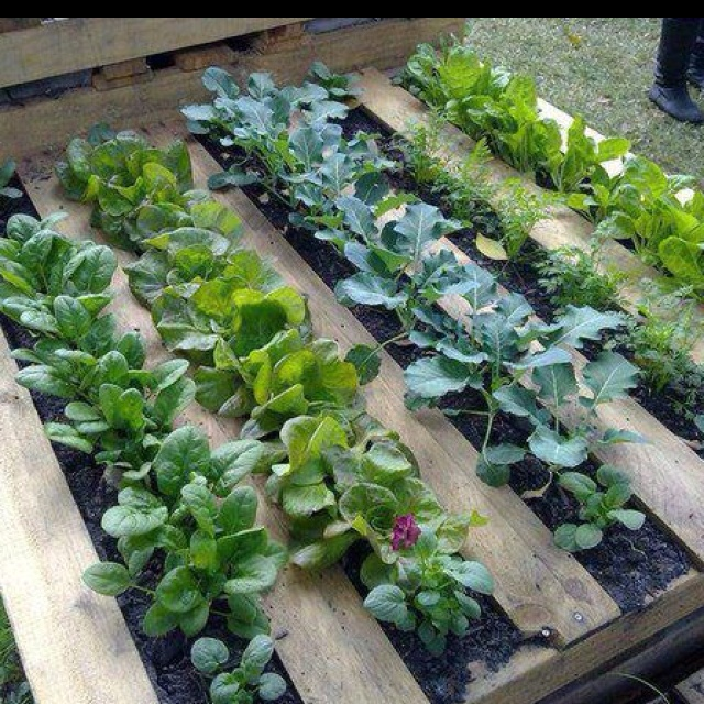 Great garden idea using pallets