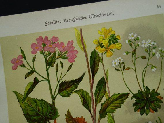 Vintage botanical print  Beautiful original by DecorativePrints