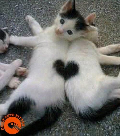 Kitten love -- too too cute