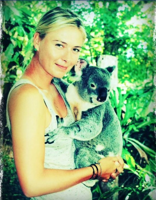 Maria Sharapova cu un urs koala in Melbourne