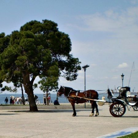 Down at the harbor, your carriage awaits!  #horse and carriage #whitetower #thessaloniki #greece #wehearthandmadebling