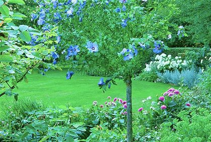 Dwarf+Trees+for+Landscaping | Best Dwarf Trees for Landscaping Photos Ideas Reviews