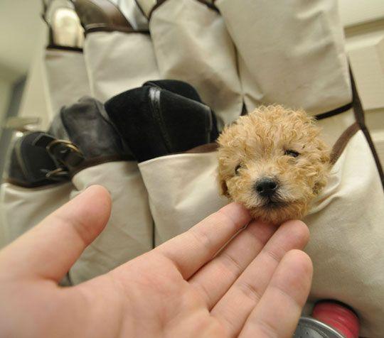 Teenie Tiny Puppy