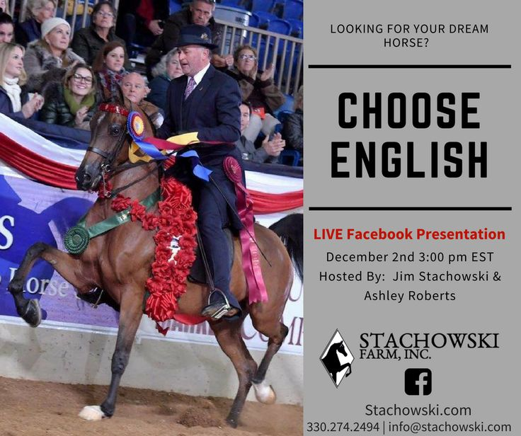 Looking for a new English horse for Christmas?  Tune in Saturday for a LIVE presentation of sale horses from Stachowski Farm.  For more information visit stachowski.com or call 330-274-2494