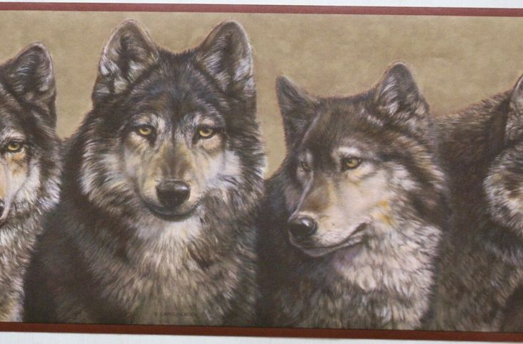 wolf wallpaper border WOLVES WALLPAPER BORDER 22B7