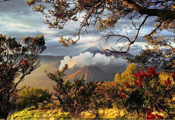Blossoming around Bromo volcano, Indonesia