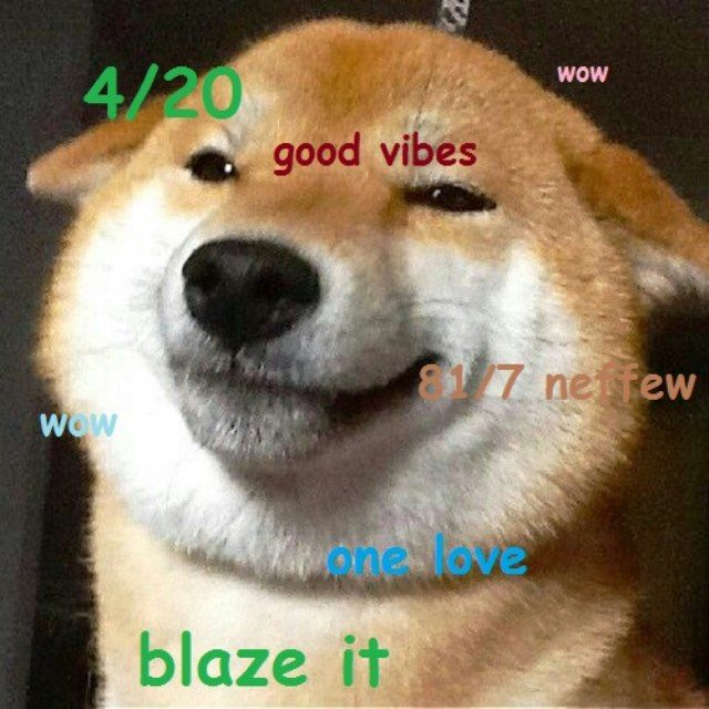 Shiba Meme Blazed Shiba Inu Japanese Dogs Shiba