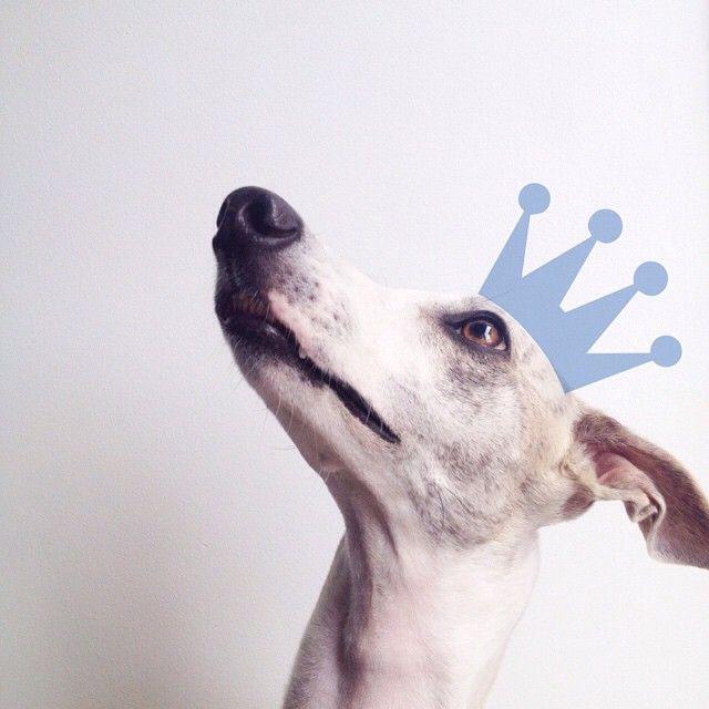 Los nuevos productos de @chachayelgalgo , hechos con ❤️para perros felices, fueron aprobados por el Rey de la casa  Ya casi disponibles en las dos sedes de @cielitolindocali ! #perrofeliz #chachayelgalgo #pasteleriacanina #paletasparaperros #amorperruno #mascotas #peluditos #perrosaludable #alimentacioncanina #YoCreoEnCali #cali #calico