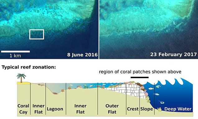 Satellites capture coral bleaching of Great Barrier Reef from space