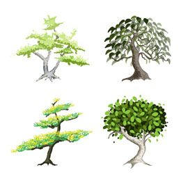 To grow a bonsai is to combine your artistic skills with science and create a beautiful work of art. The following passages talk about different types of bonsai trees.
