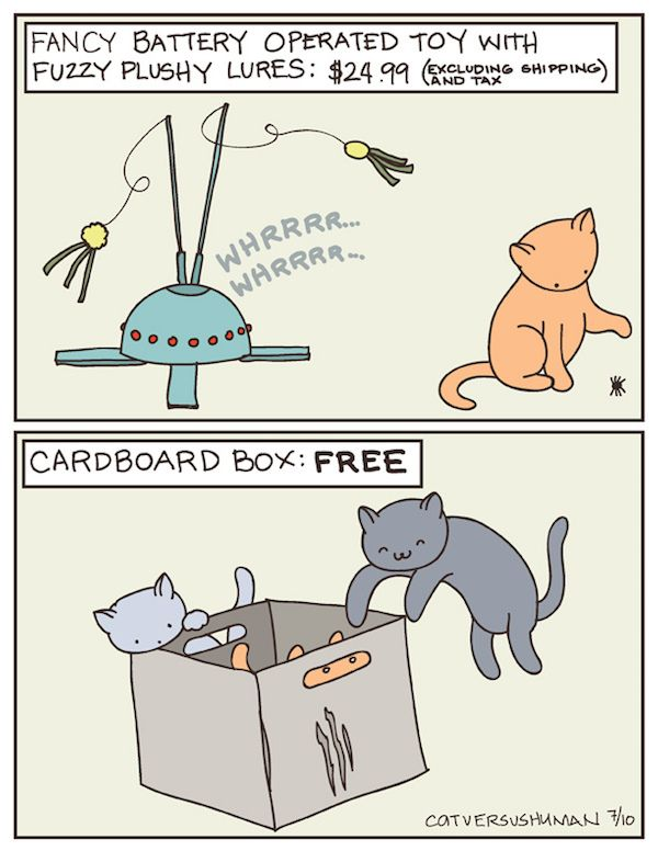 Funny cat facts that no one can deny! #omg #cats #comic #cartoon #strips #facts #animals #funny