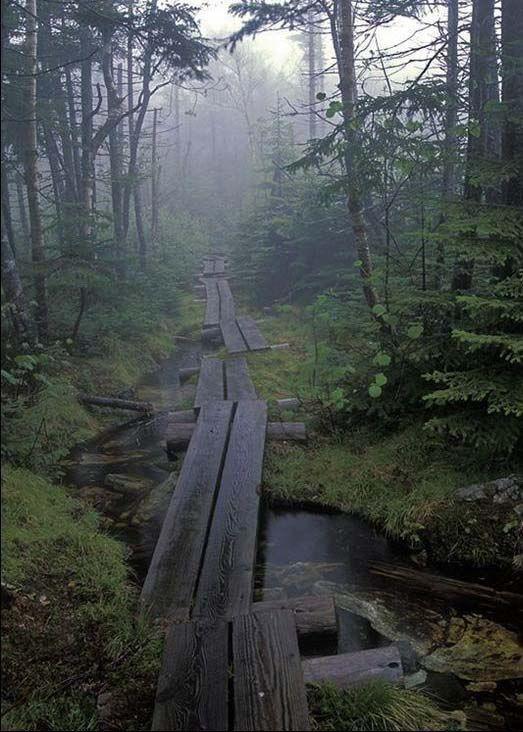 Туманный лес