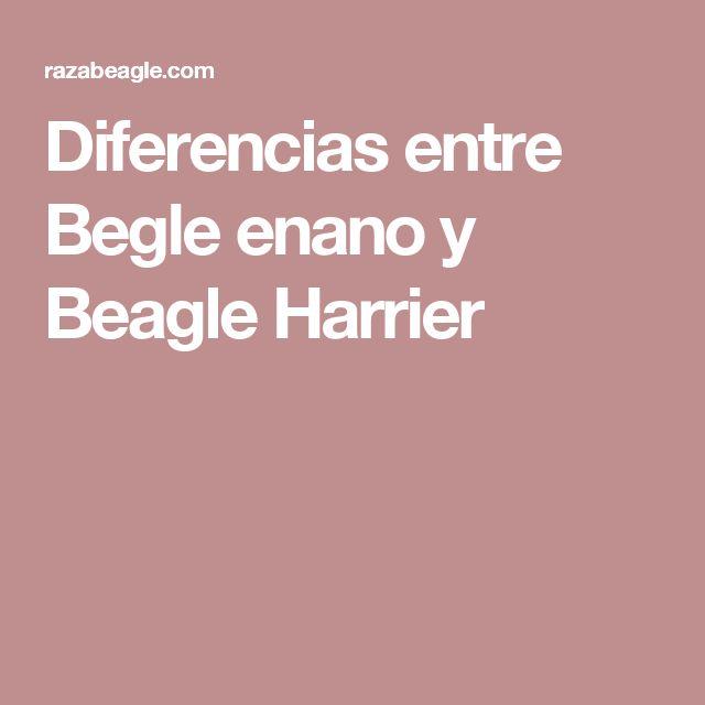 Diferencias entre Begle enano y Beagle Harrier