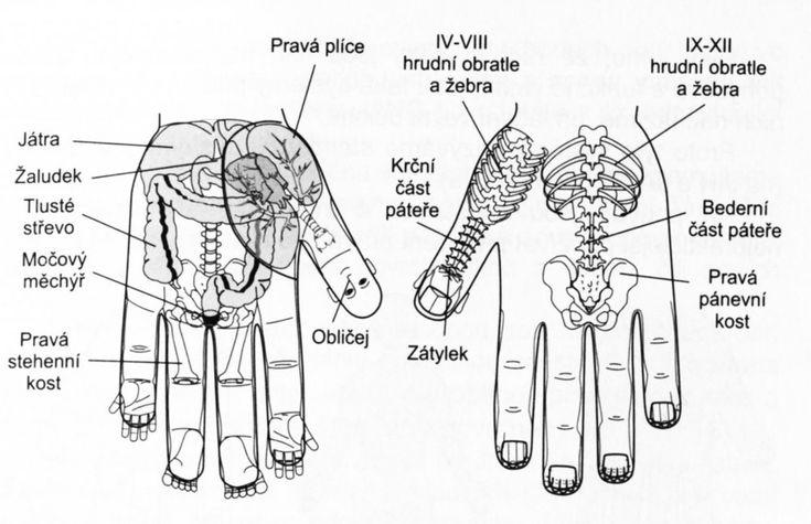 GALERIE: Metoda Su jok aneb Celé tělo v jedné ruce!   FOTO 1   Pro ženy   Blesk.cz