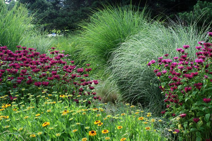 using grasses with bee balm...also rudbeckia
