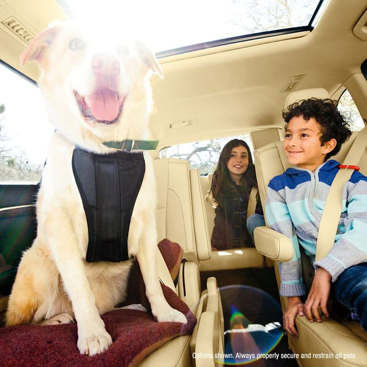 Toyota Highlander Used Mn: Road Trips Are Always More Fun With Our Furry Family