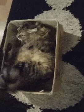 Getting Comfier in the Box