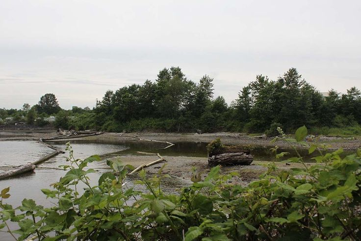 A view of the Salt Marsh area of Maplewood Flats Conservation Area in North Vancouver