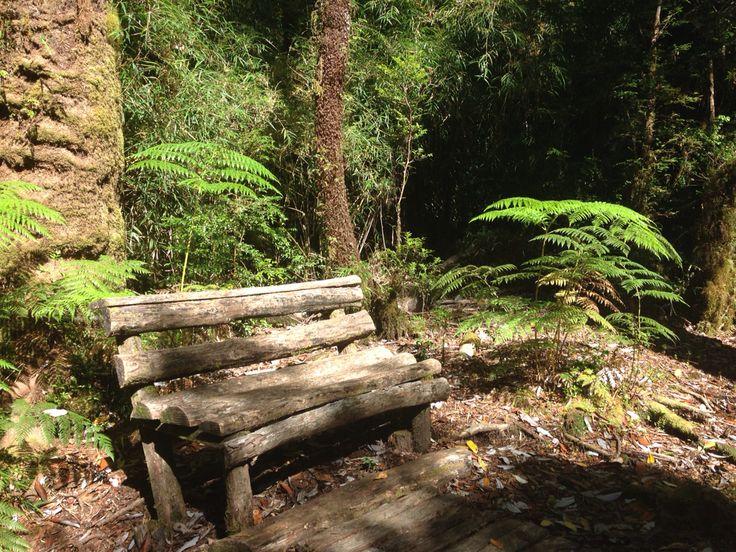 Parque Pumalin Sendero Cascada