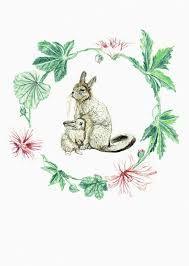 Image result for ilustracion fauna chilena