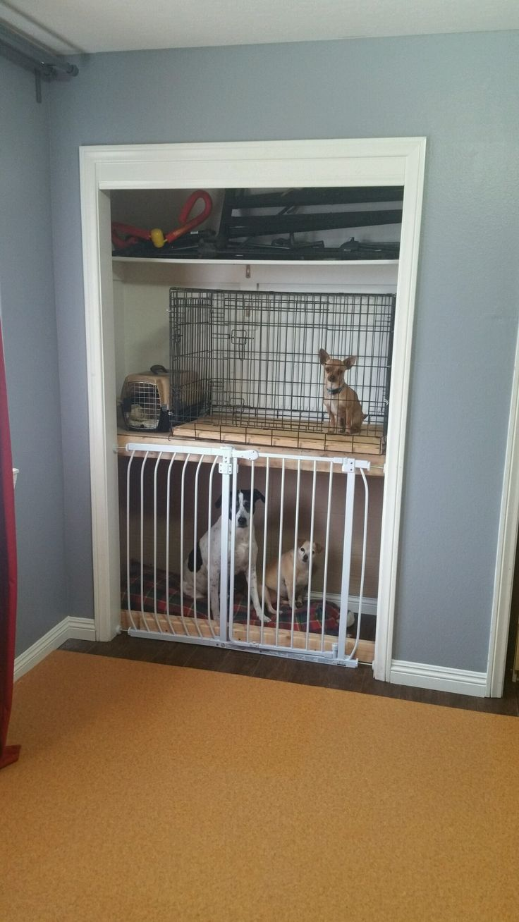 Our built in closet doggie condos  For the Home  Dog closet Dog rooms Dog crate