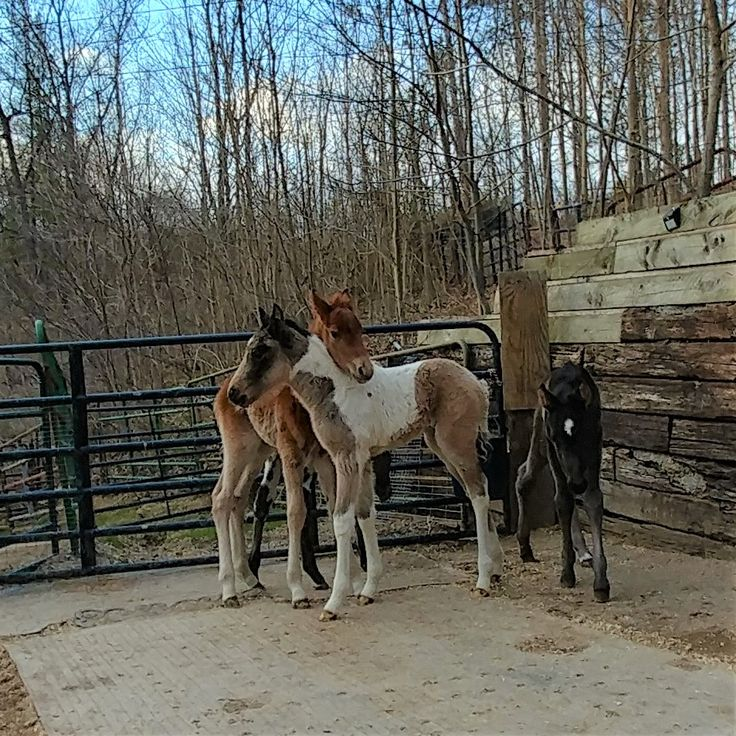 Last Chance Corral : Ohio Horse and Foal Rescue