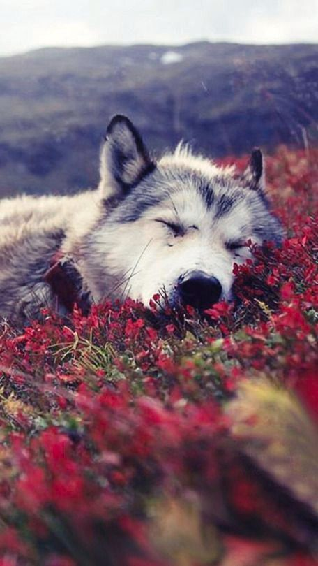 #wattpad # loup-garou The Loups are in a new home and in a … – Kimi Stemmle