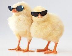 Cool Chicks Wearing Sunglasses