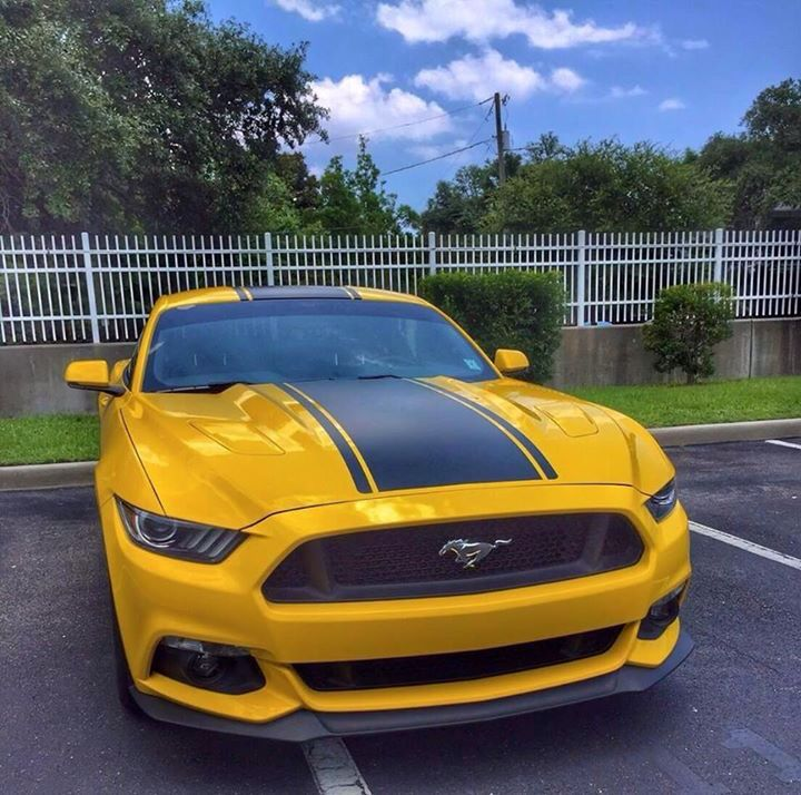 Supercharged Mustang Yellow: 1000+ Images About Cars (mostly Mustangs) On Pinterest