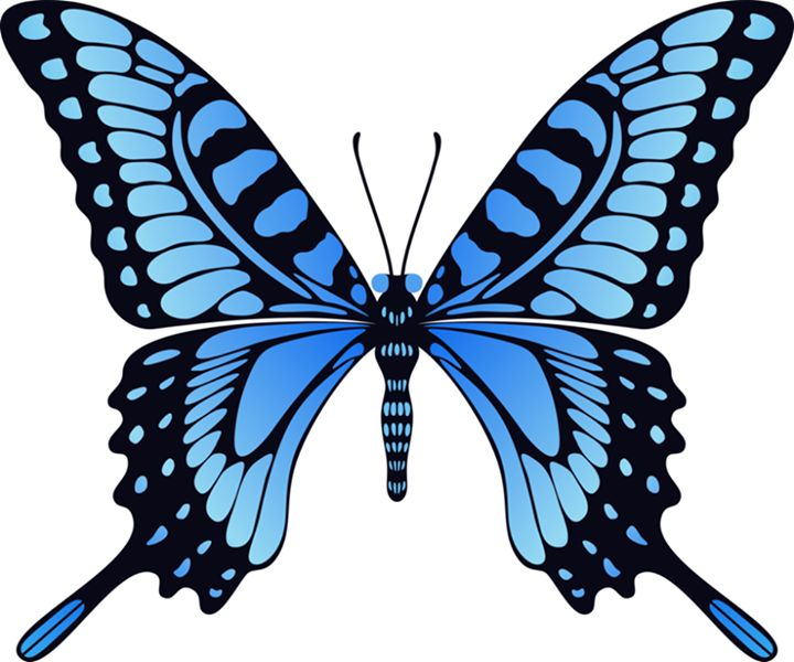 465 best butterfly images on pinterest butterflies background rh pinterest com  animated flying butterfly clipart