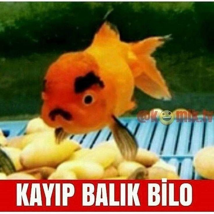 ����#izmir #ankara #istanbul #komedi #vineturkiye #mizahtürkiye #mizah #eğlence #komeda #russiangirl #komik #komedia #eglence #vineturkey #izdivaç #medya #vinetage #klip #sayko #komedya #funny #eglenceli #süper #vineburda #paylasimplatformu #troller #like4like #vinetr #aleynatilki #liseli http://turkrazzi.com/ipost/1523094712705053697/?code=BUjHpJOD3QB
